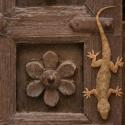 Jaisalmer Gecko
