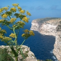 The Cliffs of Xlendi