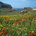 The Landscape of Gozo