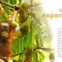 Orangutan Experience
