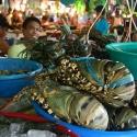 Boracay Lobster