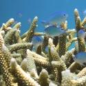 Philippines Reef