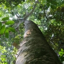 Sinharaja Rainforest Canopy