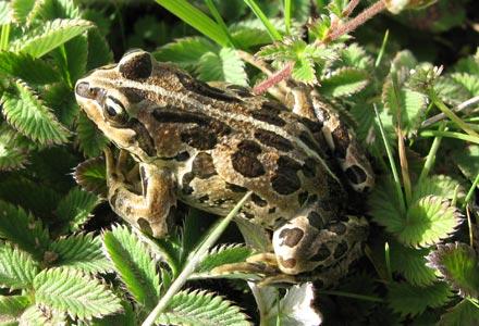 Frog in the grasslands