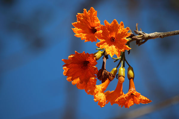 Flowering tres