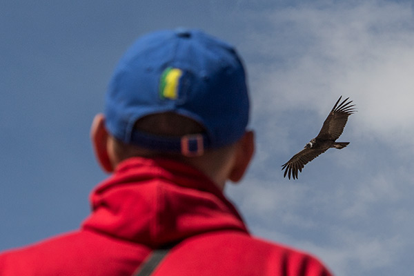 Thomas spots a condor