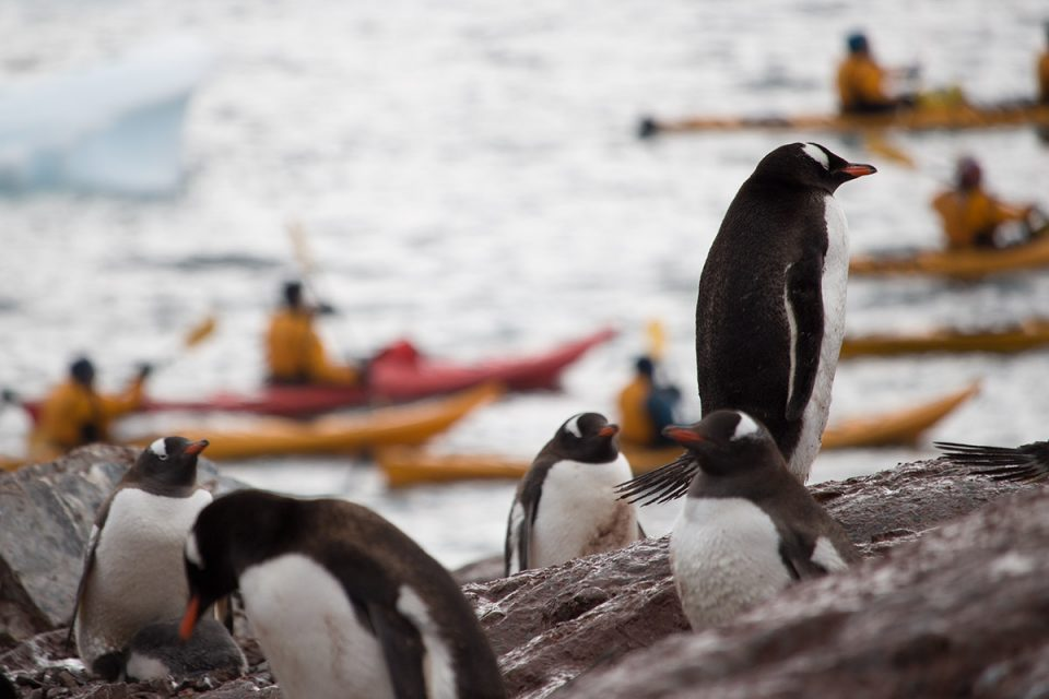 Penguins watch while kayaking in Antarctica