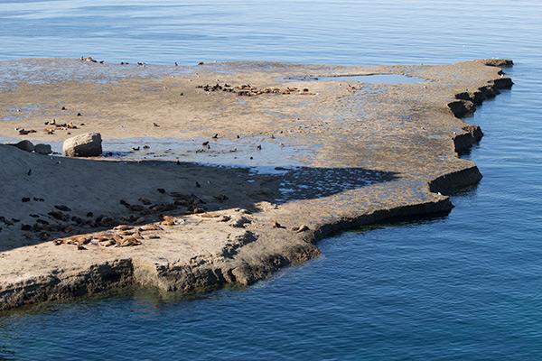 Coast at Punta Pirámide, Península Valdés