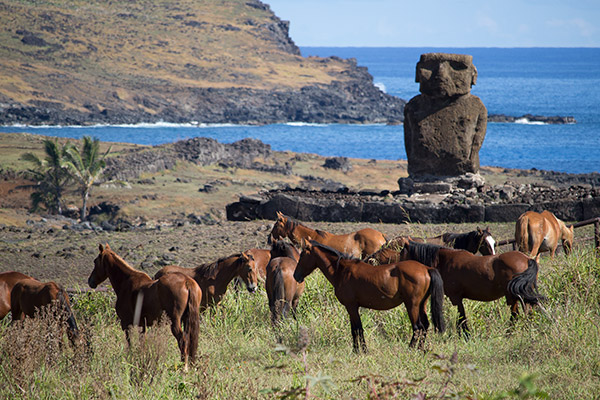 Horses above Anakena Beach