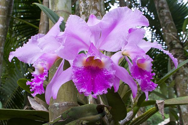 Orchids at the Botanical Garden Rio de Janeiro, Brazil