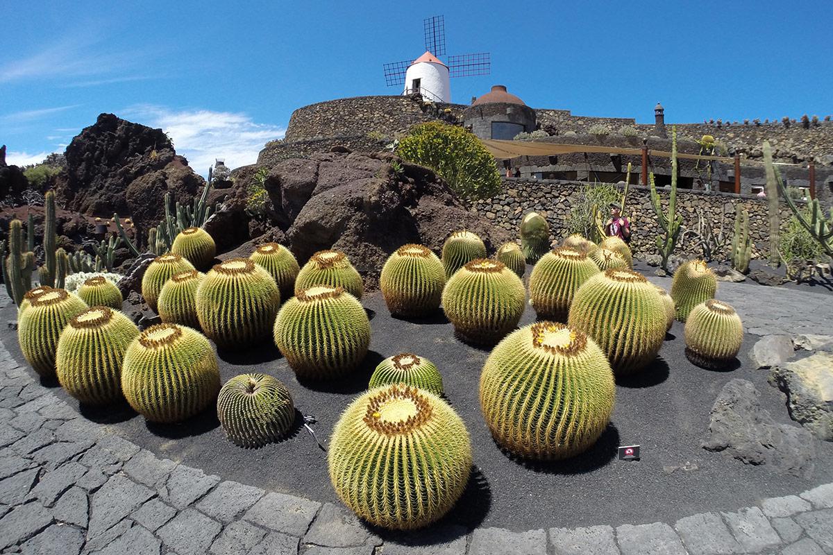 Manrique's Cactus Garden in Lanzarote
