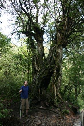 Tony by Ancient Tree on Emei Shan