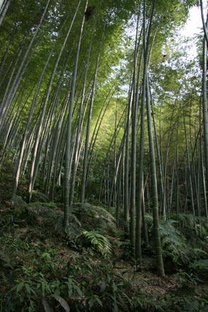 Zhuhai Bamboo Forest