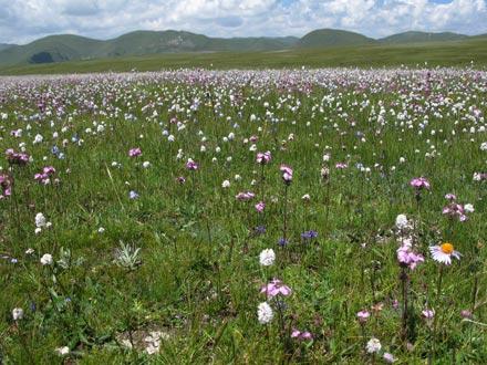 The Grasslands in Bloom