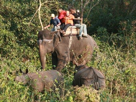 Elephant Safari, Sauraha