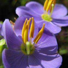 Binara Flower