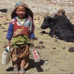 Zanskar Nomad Girl