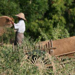 Bagan Farmer
