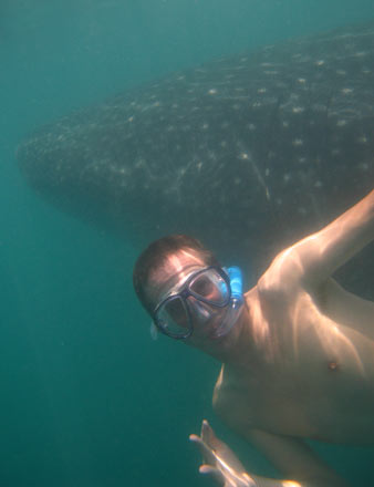 Tony with a Whale Shark