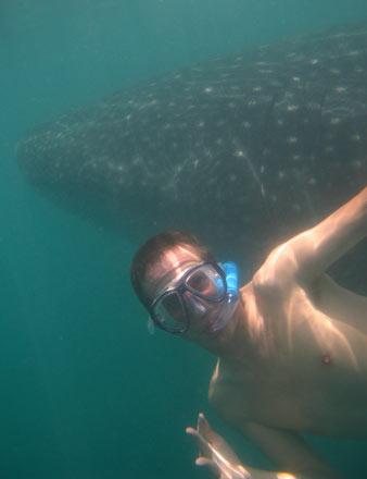 Tony with a Whale Shark
