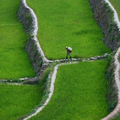 Rice Terraces of Northern Luzon