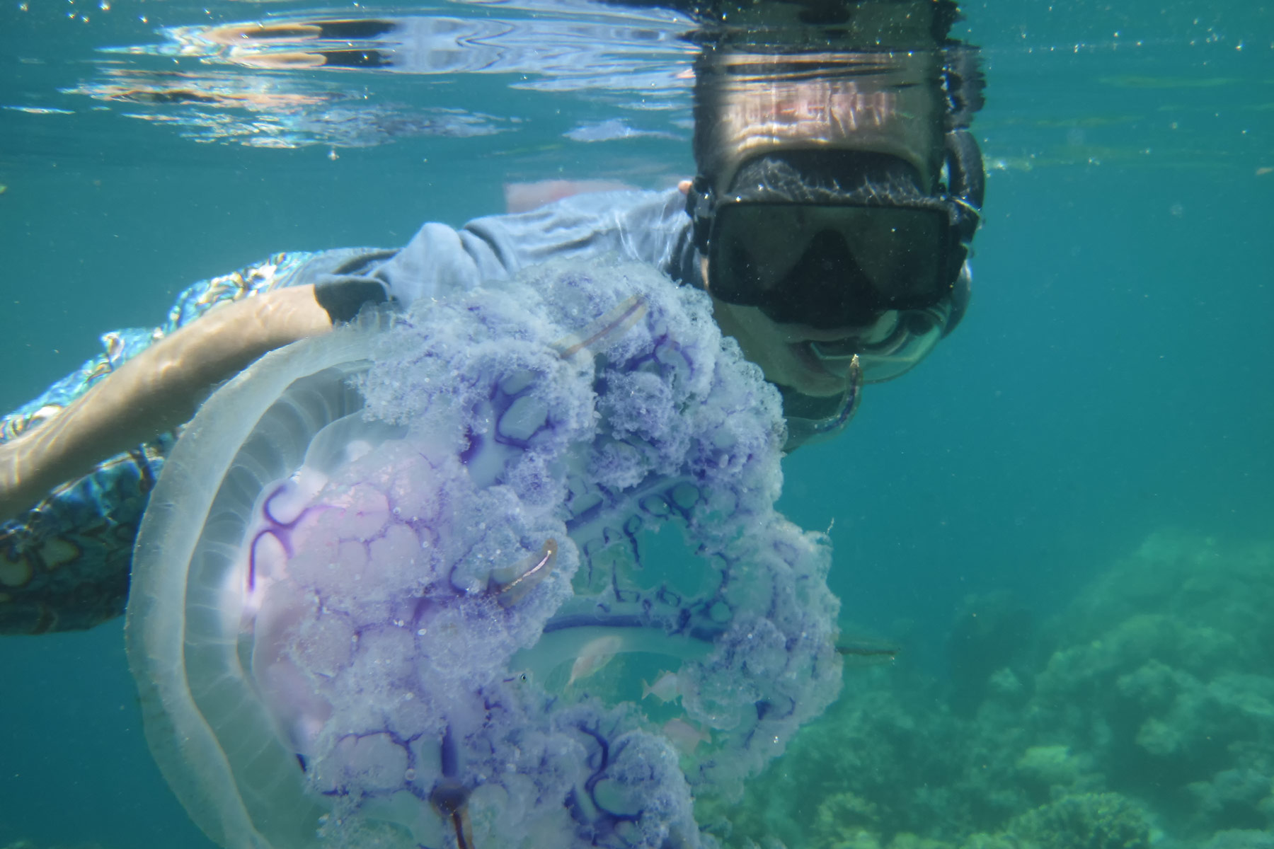 Tony Swims with Giant Jellyfish, Coron Island
