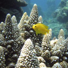 Palawan Coral