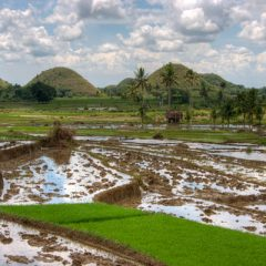 Countryside of Bohol
