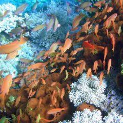 Philippines Underwater