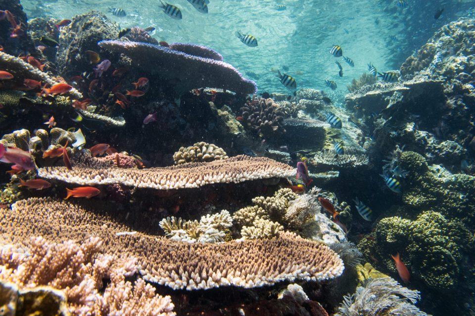Gorgeous Tatawa Kecil reef off Komodo