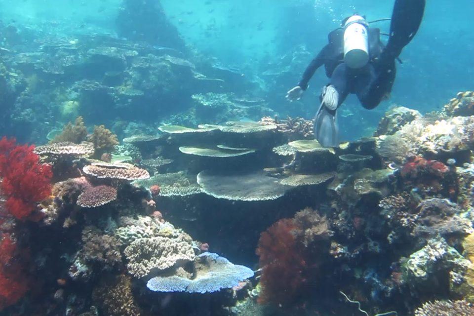 Diving Tatawa Kecil
