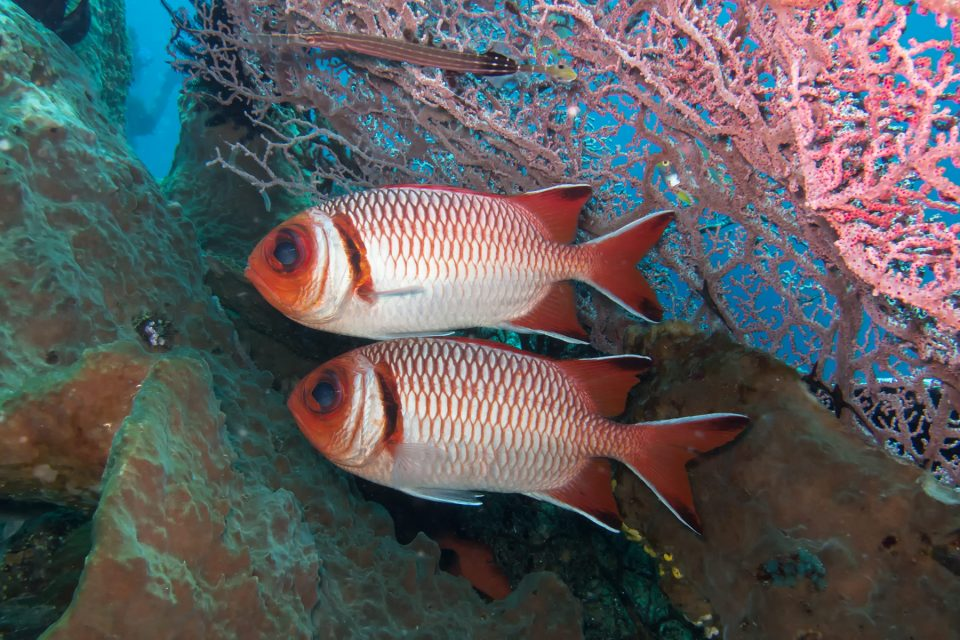Underwater off Komodo