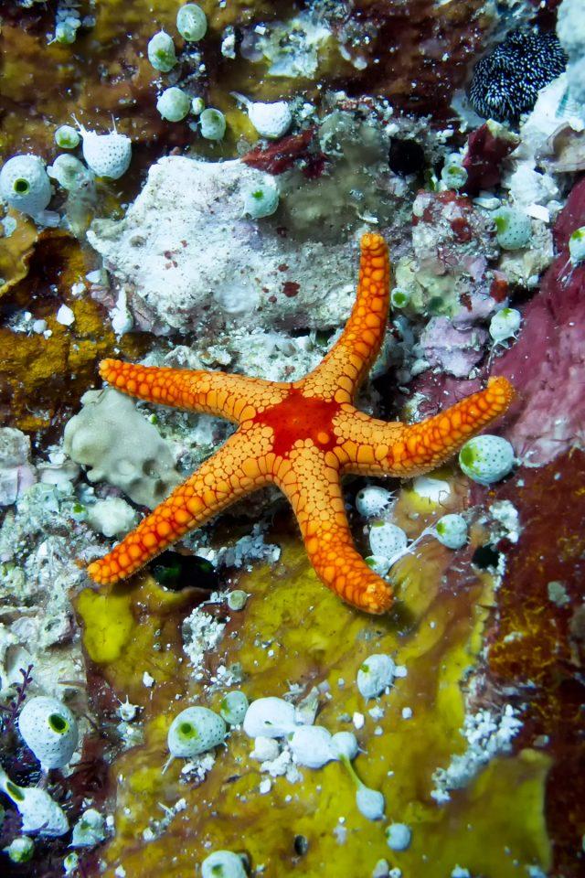 Starfish on Komodo dive
