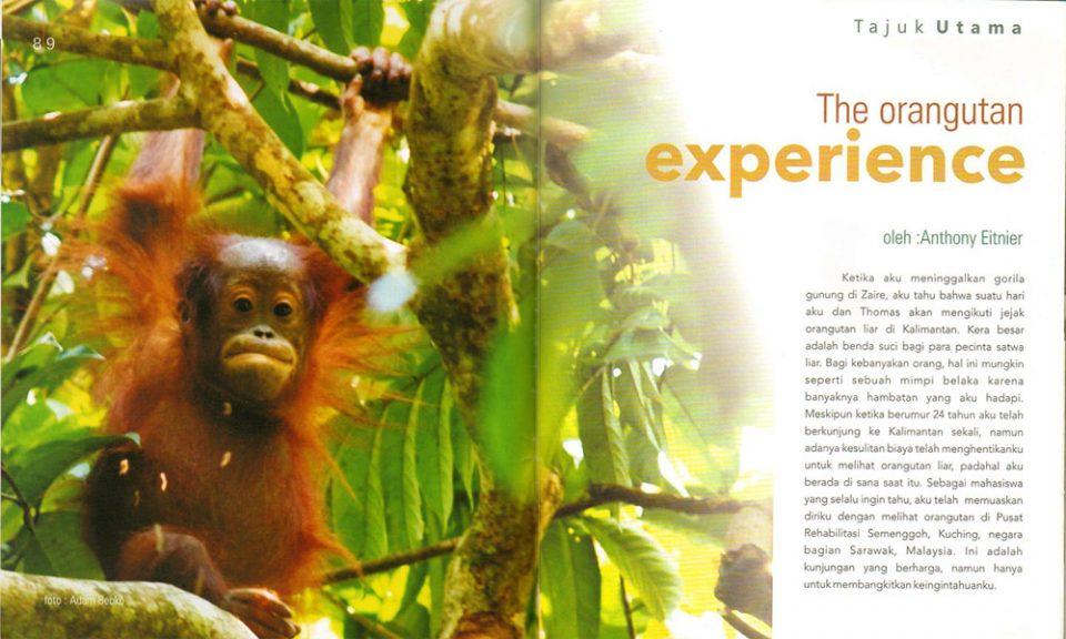 Orangutan brochure
