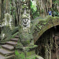 Thomas in Ubud's Monkey Forest