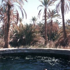 Thomas in Siwa Oasis