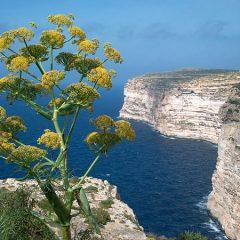 The Cliffs of Xlendi