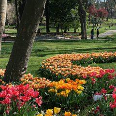 Tulips in Gülhane Park