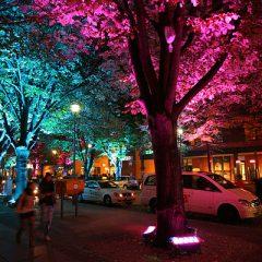 Rainbow trees at Potsdamer Platz