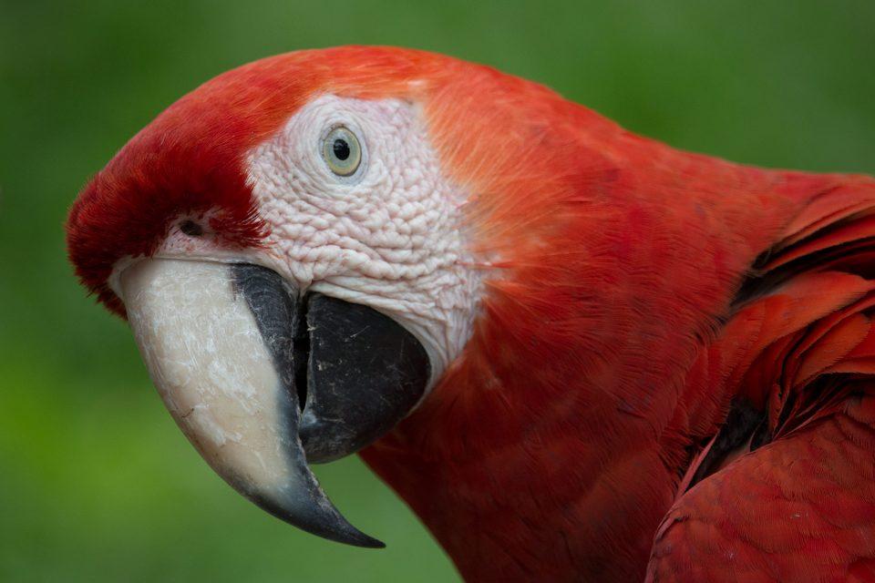 Macaw at La Venta
