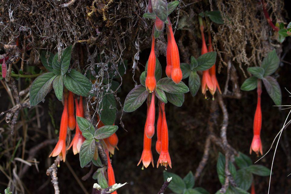 Salkantay trek to Machu Picchu: Flowers along the trek