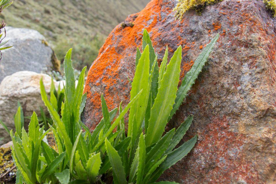Salkantay trek to Machu Picchu: Orange lichens color the rocky landscape
