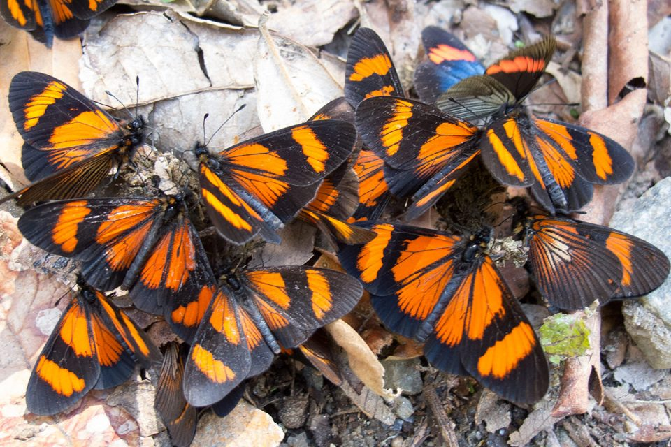 Salkantay trek to Machu Picchu: Butterflies on the trail