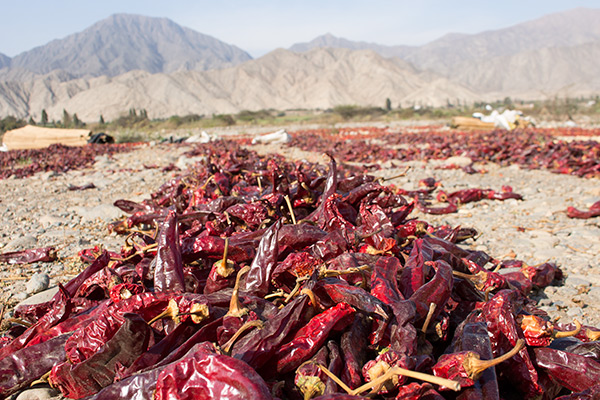 Caral: Pepper drying in the sun