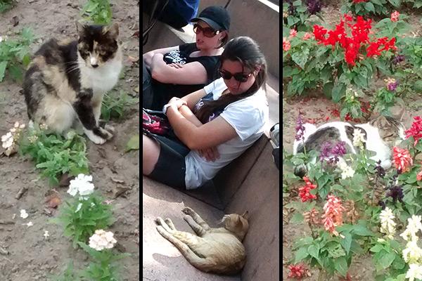 Lima's cat park