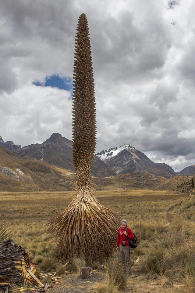 Thomas stands next to a giant Puya raimondii