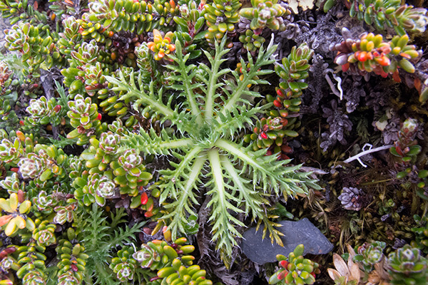 Plant life, Tierra del Fuego