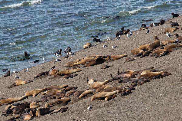Sea lion colony at Punta Norte, Península Valdés