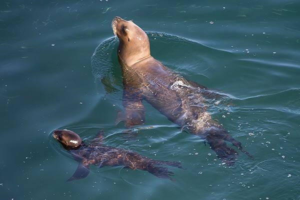 Sea lions at Punta Pirámide, Península Valdés