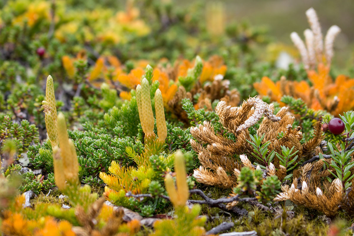 Colorful plant life in Torres del Paine